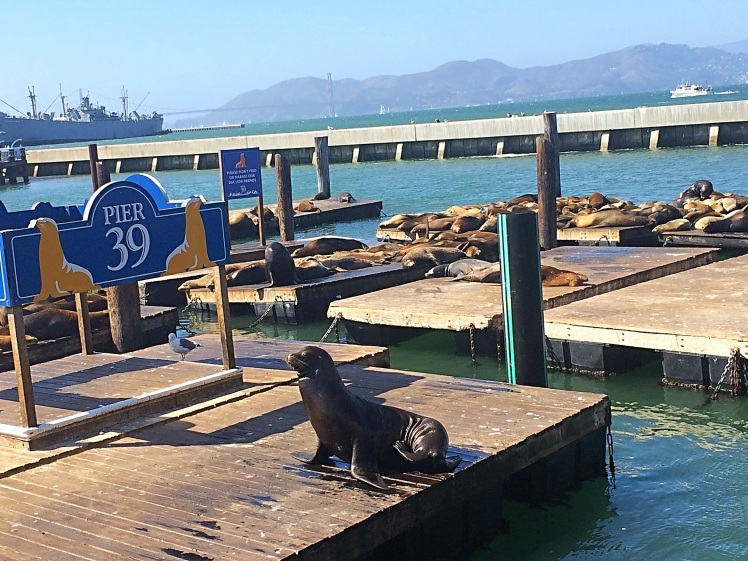 Pier39-Sea-Lions-San-Francisco